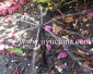 应果树灌溉专用插